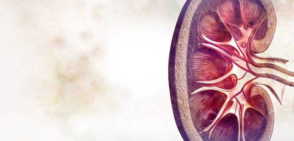 Erlotinib Reduced Renal Inflammation in Alport Syndrome Mice, but Not Kidney Damage
