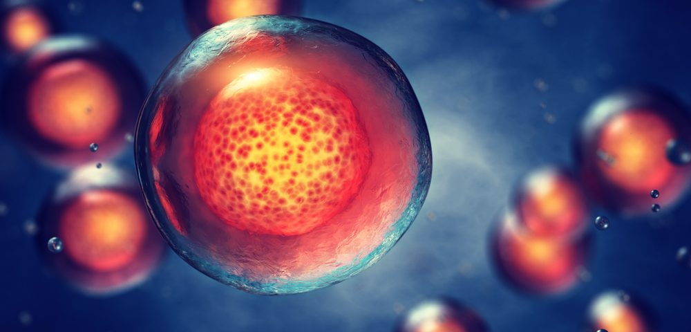 Stem Cells Can Slow Alport by Reining in Blood Vessel Growth Signaling, Study Shows