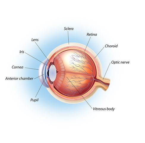 Rupture of Eye's Lens Capsule Is Rare and Avoidable Risk in Alport, Case Report Argues